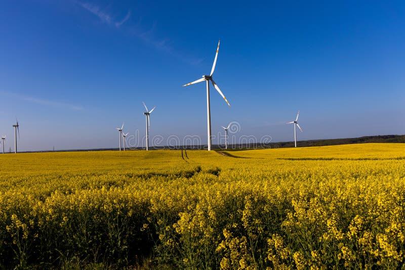 Paisagem com um campo da violação amarela com um céu sem nuvens azul e umas explorações agrícolas de vento ecológicas imagens de stock royalty free