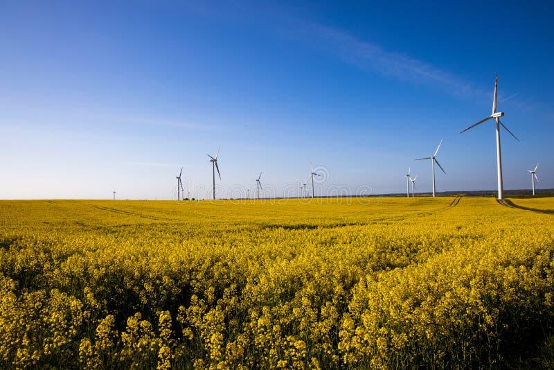 Paisagem com um campo da violação amarela com um céu sem nuvens azul e umas explorações agrícolas de vento ecológicas imagem de stock royalty free