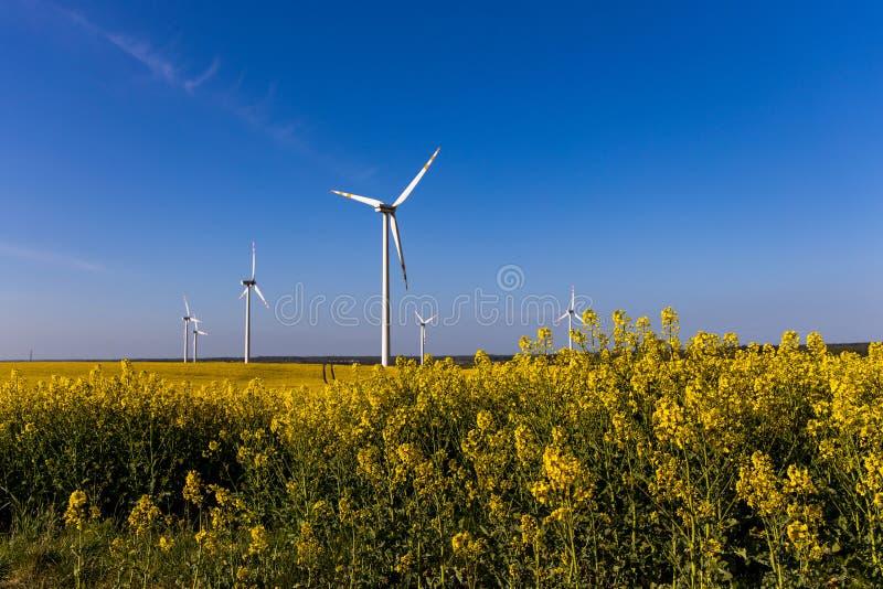 Paisagem com um campo da violação amarela com um céu sem nuvens azul e umas explorações agrícolas de vento ecológicas fotos de stock royalty free