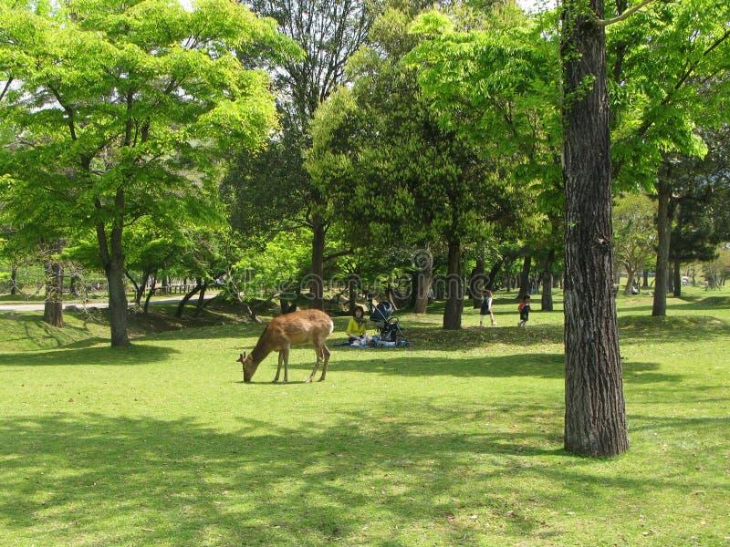 Paisagem com um cervo e os visitantes, descansando sob as árvores no parque público Nara Park na cidade de Nara, Japão foto de stock royalty free