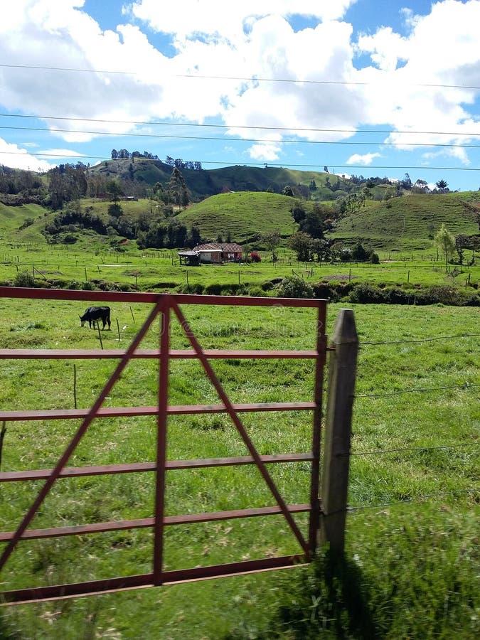 Paisagem com uma casa e as vacas fotos de stock