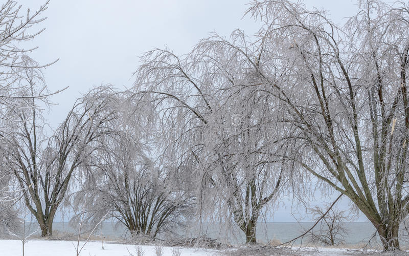 Paisagem congelada do inverno imagem de stock royalty free