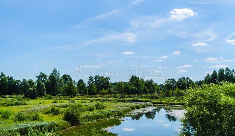 Paisagem da água da região pantanosa do pântano Floresta verde, e rio pequeno fotografia de stock
