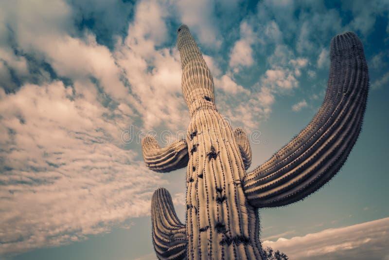Paisagem da árvore do cacto do deserto do Arizona foto de stock royalty free