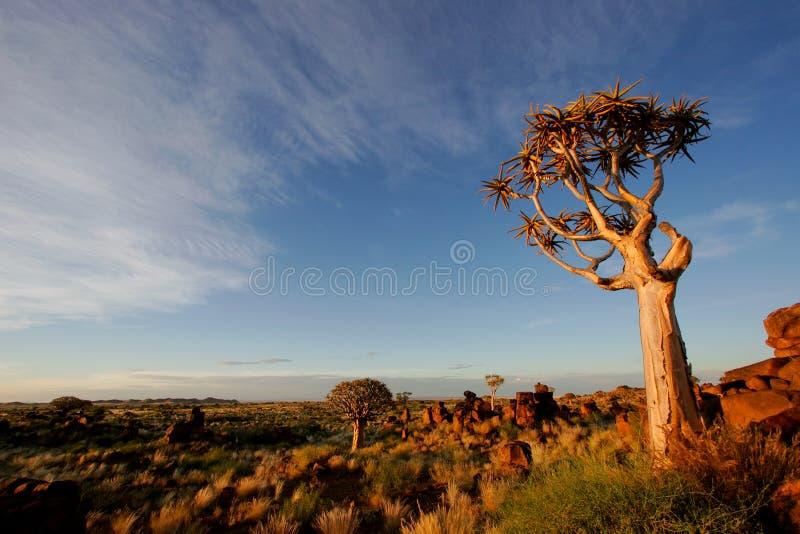 Paisagem da árvore do Quiver imagem de stock royalty free