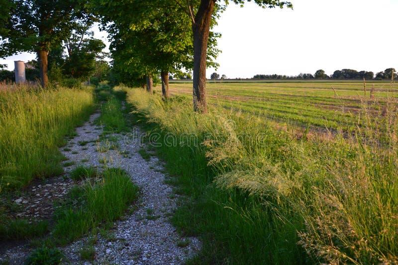 Paisagem da agricultura do verão foto de stock