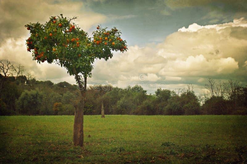 paisagem da Alaranjado-árvore fotos de stock