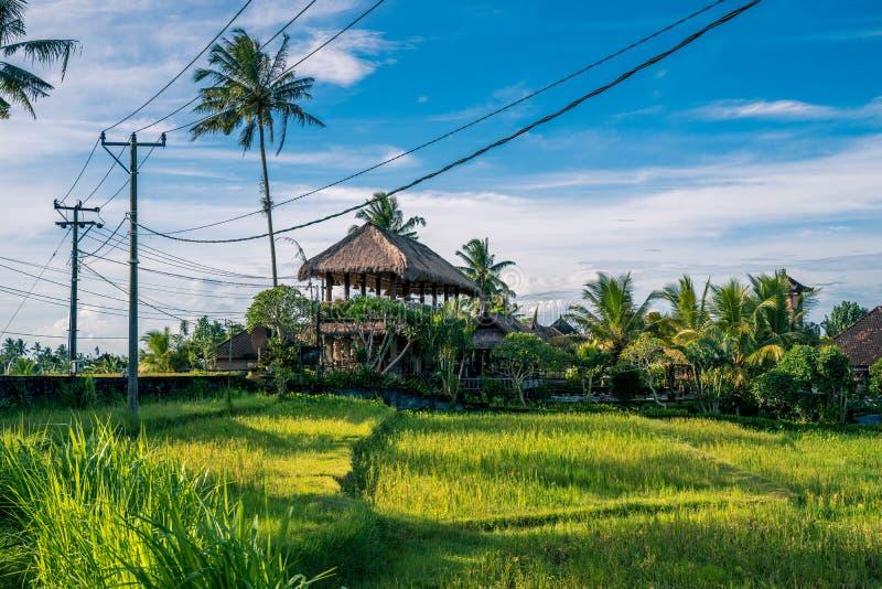 Paisagem da casa da exploração agrícola em Ubud, Bali fotos de stock royalty free