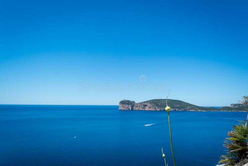 Paisagem da costa do Capo Caccia, em Sardinia imagem de stock royalty free