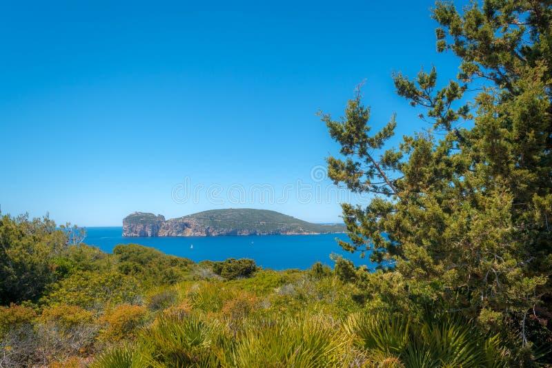 Paisagem da costa do Capo Caccia, em Sardinia fotografia de stock royalty free