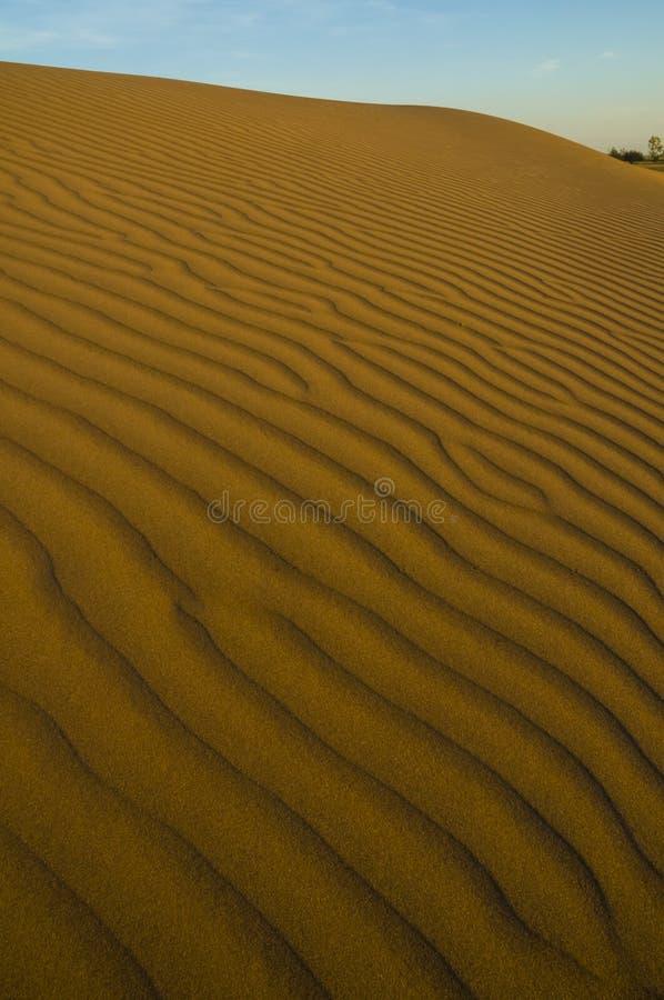 Paisagem da duna, La Pampa foto de stock