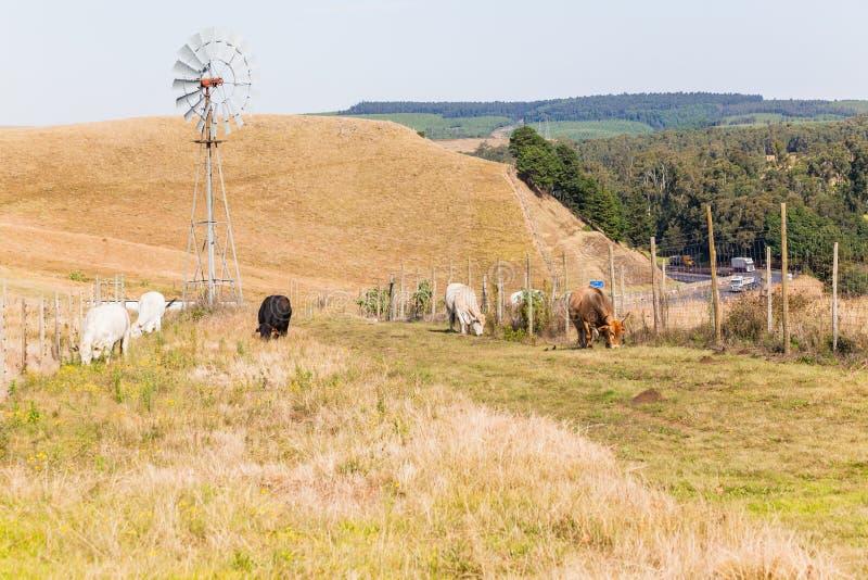 Paisagem da estrada da estrada dos animais de cultivo imagem de stock