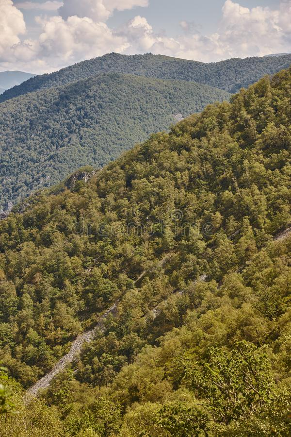 Paisagem da floresta do carvalho nas Ast?rias Parque natural de Muniellos foto de stock