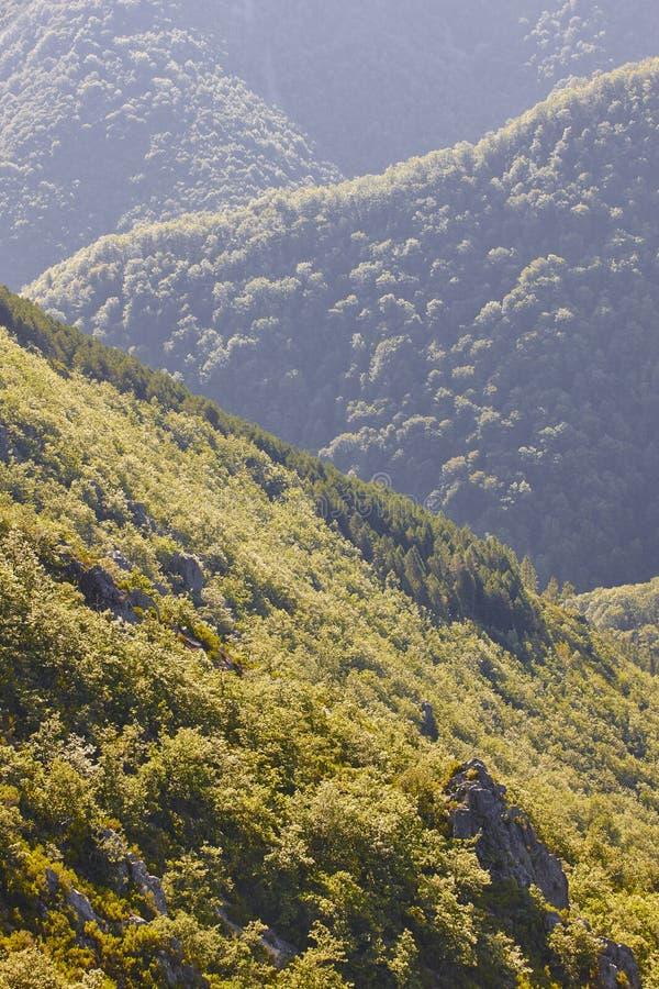 Paisagem da floresta do carvalho nas Ast?rias Ponto de vista de Muniellos imagens de stock royalty free