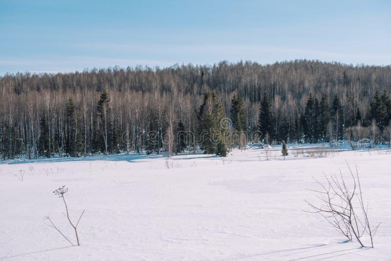 Paisagem da floresta do inverno Taiga no inverno Floresta Siberian no inverno A neve cobriu árvores Árvores de Natal sob a neve imagem de stock