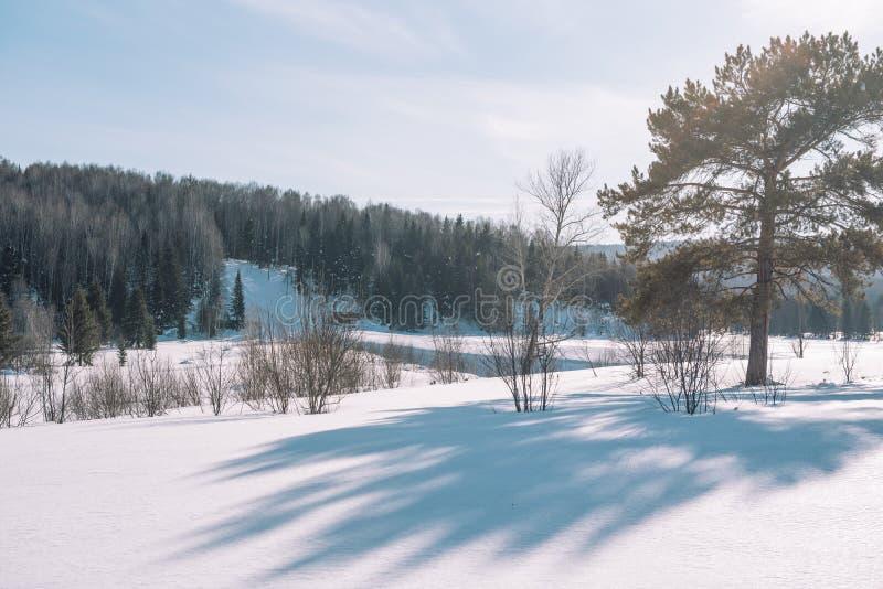 Paisagem da floresta do inverno Taiga no inverno Floresta Siberian no inverno A neve cobriu árvores Árvores de Natal sob a neve imagens de stock
