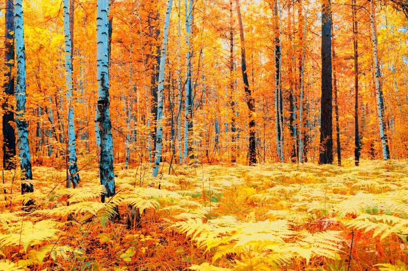 Paisagem da floresta do outono no tempo nebuloso - árvores e samambaia do outono da floresta no primeiro plano Natureza da flores imagens de stock royalty free