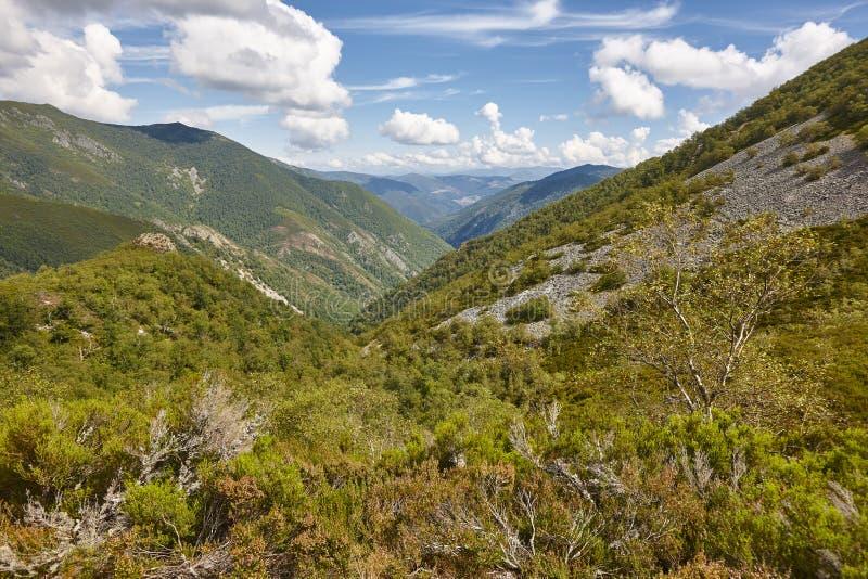 Paisagem da floresta do vale do carvalho nas Astúrias Parque natural de Muniellos foto de stock