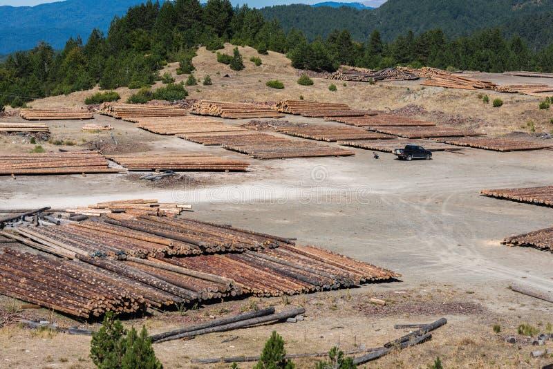 Paisagem da floresta dos logs de madeira de madeiras de pinho na floresta, empilhados em uma pilha no parque nacional de Pindus fotos de stock