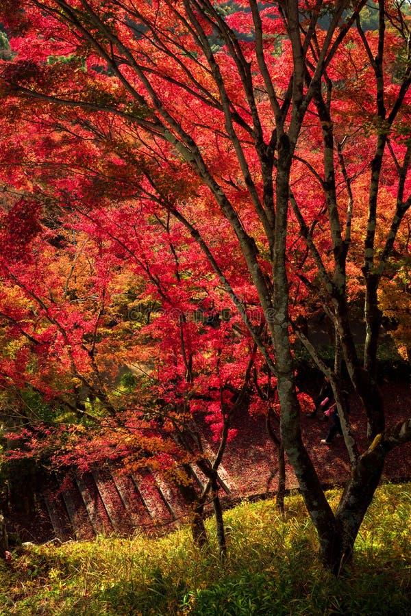 Paisagem da folha do outono, Kyoto, Japão fotografia de stock