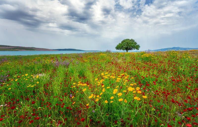 Paisagem da grama de prado e uma única árvore Izmir/Sakran/Aliaga/Turquia fotos de stock