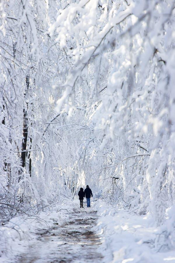 Paisagem da madeira do inverno fotografia de stock