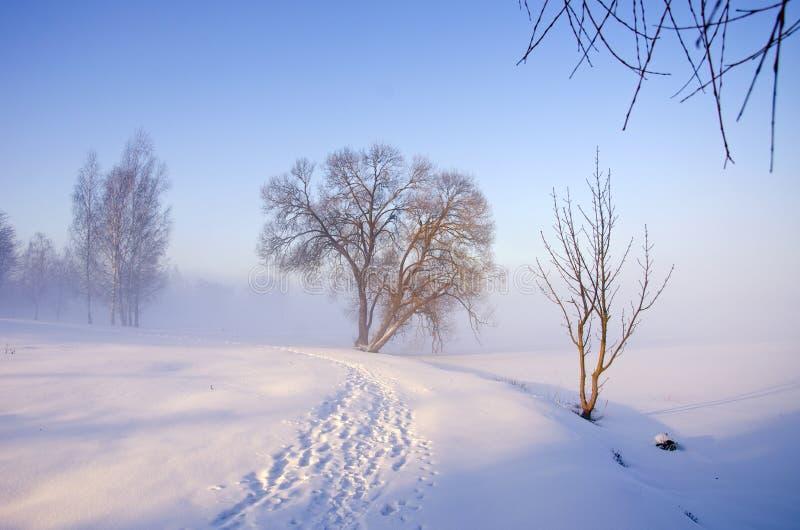 Paisagem da manhã do inverno com névoa fotografia de stock