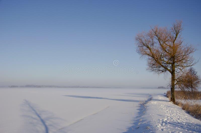 Paisagem da manhã do inverno com sombra da névoa e da árvore fotografia de stock royalty free