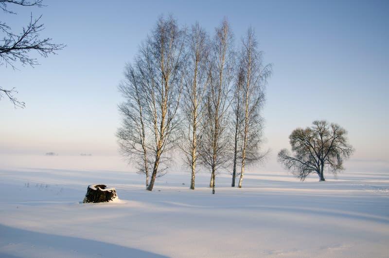 Paisagem da manhã do tempo de inverno com árvore de vidoeiro fotografia de stock