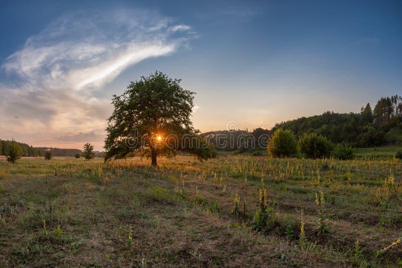 Paisagem da mola com a árvore no prado foto de stock royalty free
