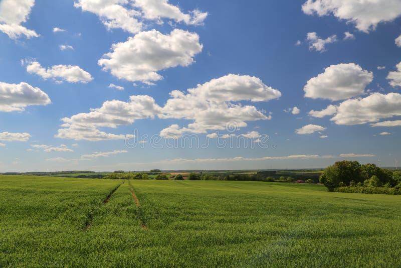 Paisagem da mola com campos verdes do trigo de inverno foto de stock