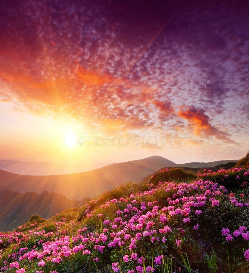 Paisagem da mola com o céu nebuloso e a flor fotografia de stock