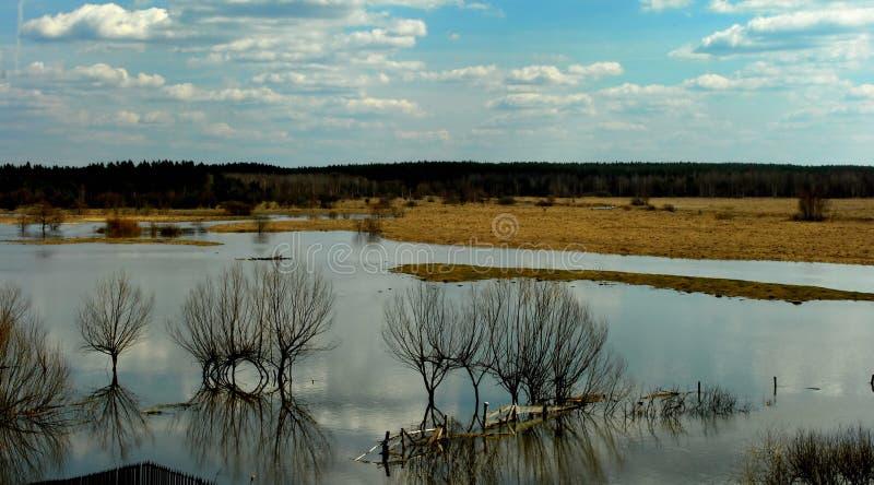 Download Paisagem da mola imagem de stock. Imagem de inundação - 29829817
