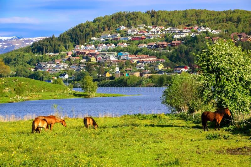 Paisagem da mola com os cavalos que comem a grama em um prado verde por um lago na luz solar fotos de stock royalty free