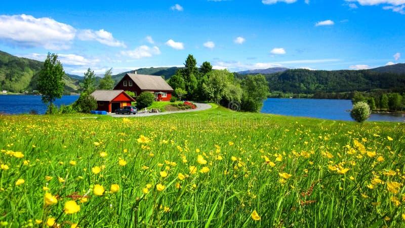 Paisagem da mola com um prado de flores amarelas selvagens do botão de ouro e uma casa vermelha bonita por um lago na luz solar imagem de stock