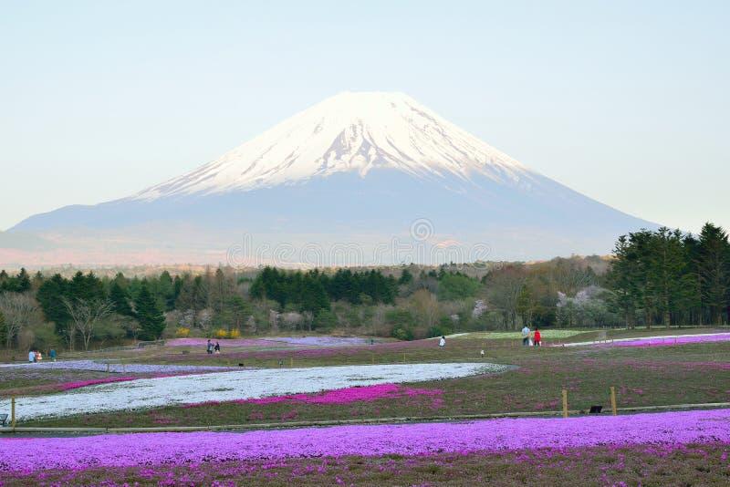 Paisagem da mola de campos de flor coloridos de Shibazakura com o Monte Fuji em Japão imagens de stock