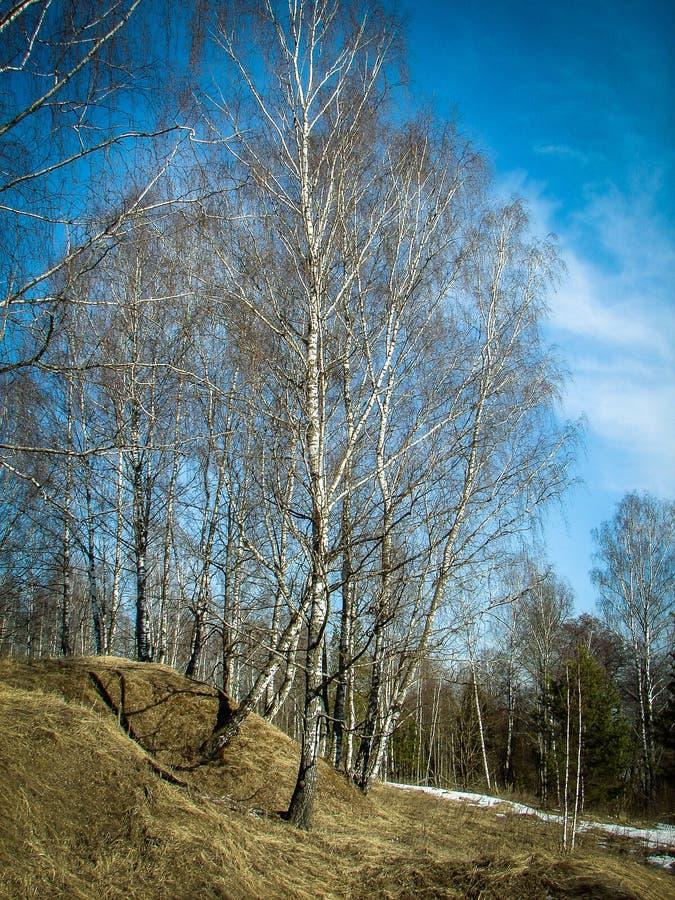 Paisagem da mola na região de Kaluga (Rússia) fotografia de stock