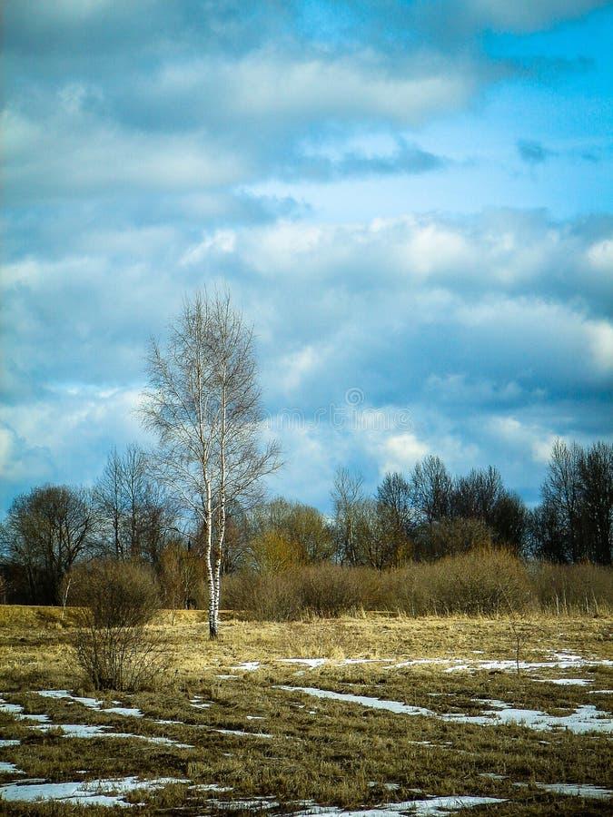 Paisagem da mola na região de Kaluga (Rússia) imagem de stock royalty free