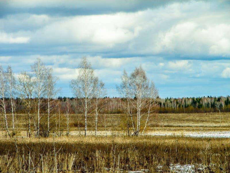 Paisagem da mola na região de Kaluga (Rússia) foto de stock royalty free