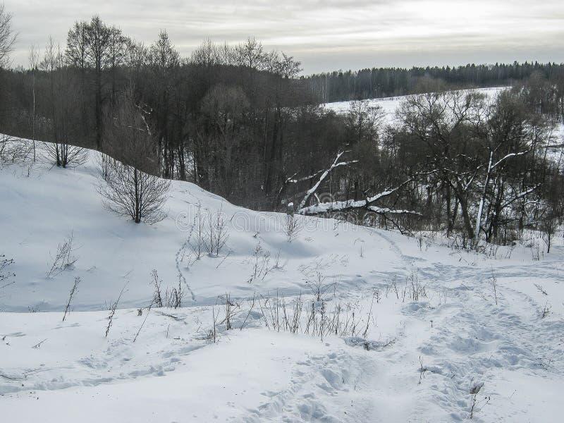 Paisagem da mola no lago na região de Kaluga (Rússia) fotos de stock
