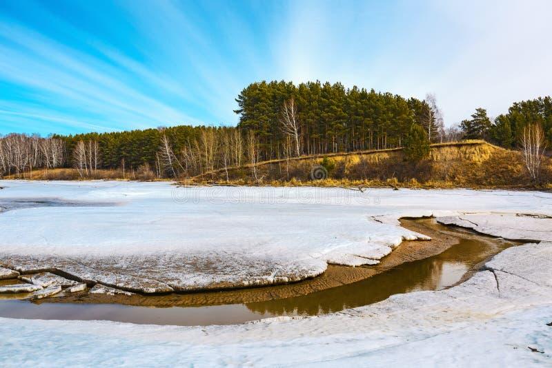 Paisagem da mola no rio Siberian Sibéria ocidental, Rússia fotos de stock royalty free