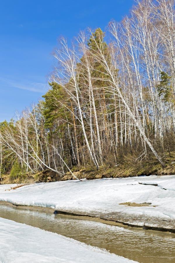 Paisagem da mola Sibéria, Rússia fotografia de stock