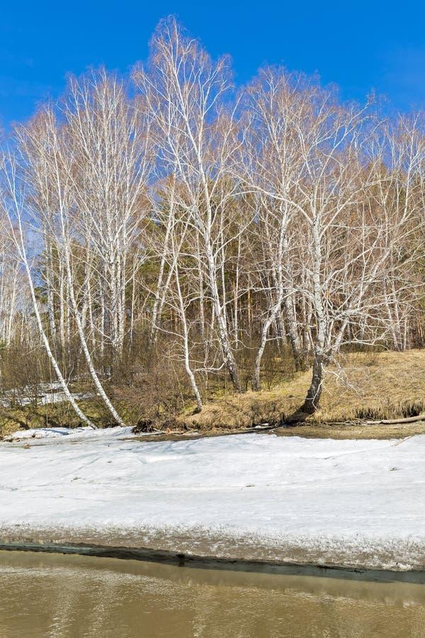 Paisagem da mola Sibéria, Rússia imagem de stock royalty free