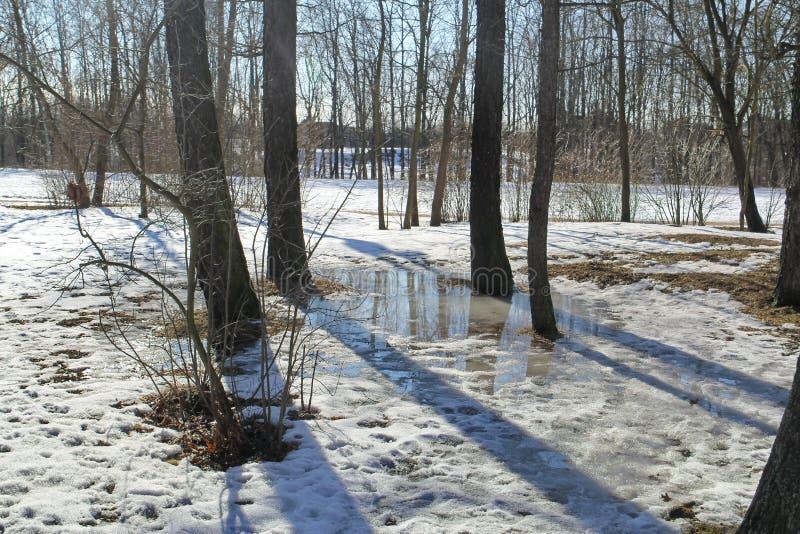 Paisagem da mola Uma poça da água e da neve de derretimento na floresta em um esclarecimento fotos de stock