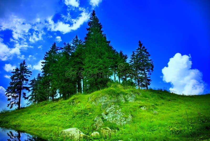 Paisagem da montanha - abeto, grama e céu foto de stock royalty free