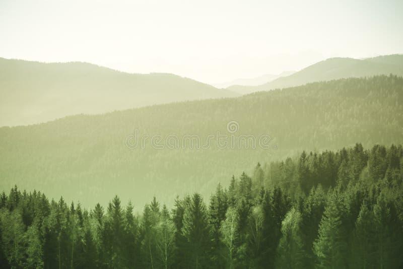 Paisagem da montanha com abeto vermelho e pinheiros nos cumes austríacos durante um dia ensolarado brilhante fotos de stock