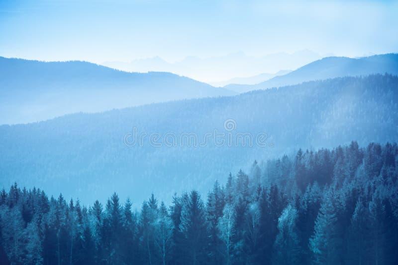Paisagem da montanha com abeto vermelho e pinheiros nos cumes austríacos durante um dia ensolarado brilhante calmo com raios clar fotos de stock