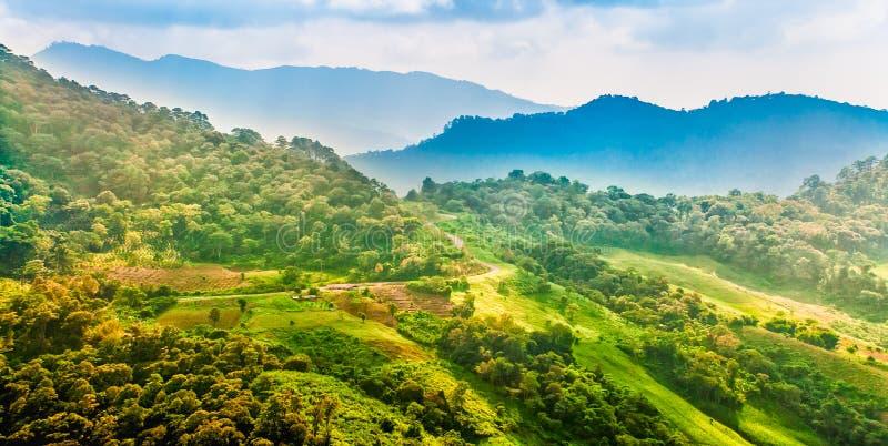 Paisagem da montanha com estrada e plantação, Chiang Rai, Thail fotos de stock