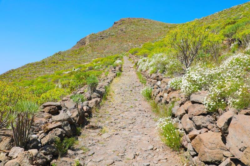 Paisagem da montanha com a fuga de caminhada em Arona, Tenerife, Espanha fotos de stock