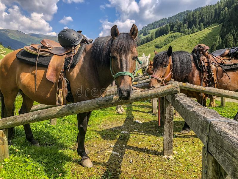 Paisagem da montanha com pastagem de cavalos em Áustria fotos de stock royalty free